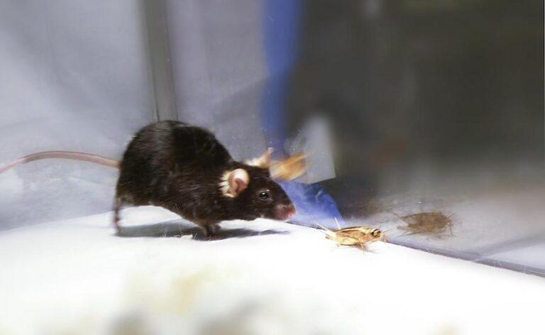 Kuidas hiirte kartus esinemishirmuga seotud on?